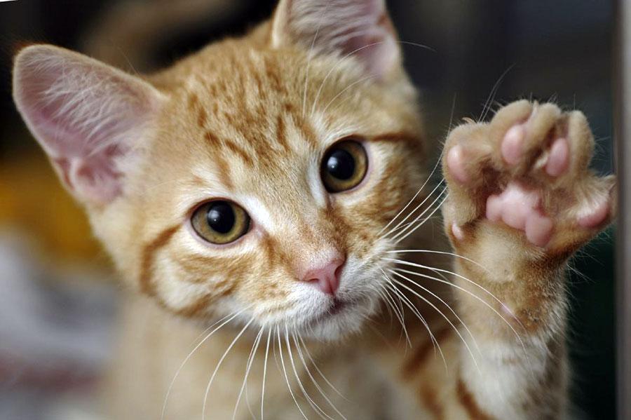 gatto-2
